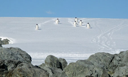 Penguins on Patrol in the Argentine Island Group