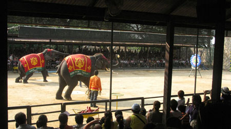 Elephant Darts Show at Pattaya