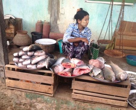 Fish for sale at Nyaung Un market, Bagan
