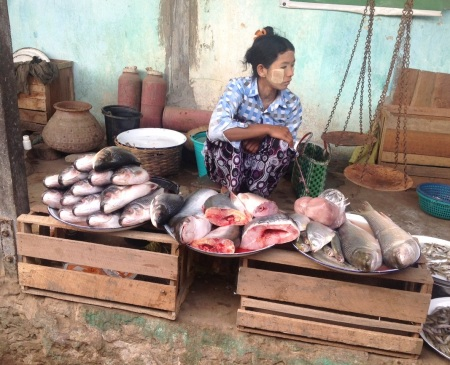 Fish for sale at Nyaung Un market, Bagan