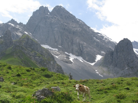 The cows roam freely in the area around Busenalp