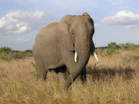 Less than 6 months later we were to meet the Elsworths by chance in the Kruger National Park in South Africa.