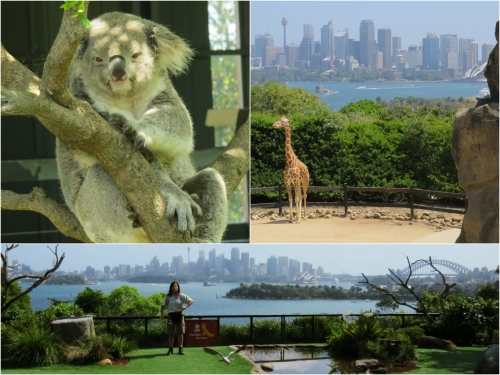There is probably no other Zoo in the world that has such a fantastic location as the Taronga Park Zoo in Sydney.
