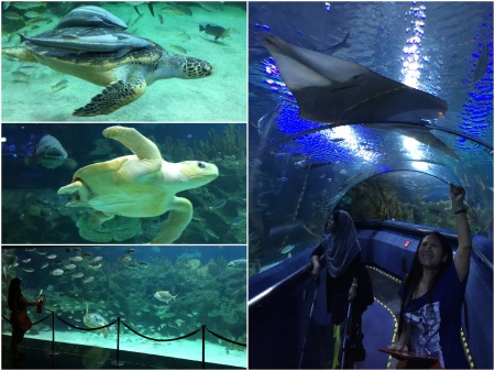 The State of the Art Aquarium is a must see attraction.