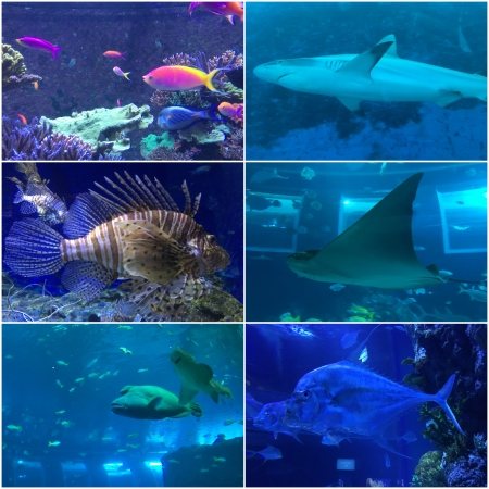 10 The South East Asia Aquarium on Sentosa displays an impressive variety of Sea Life.