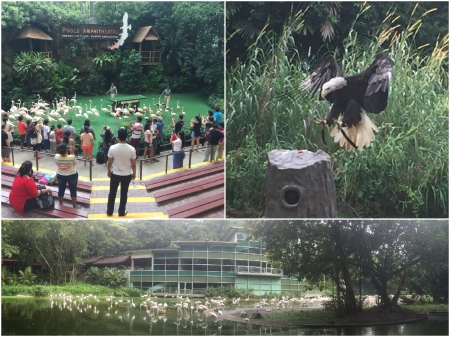 12 The Jurong Bird Park has been one of Singapore's most popular attractions for decades.