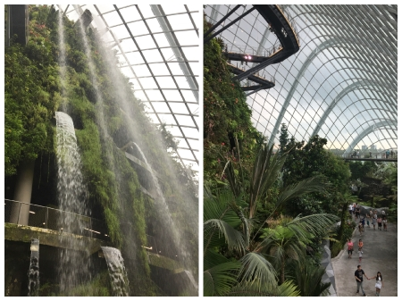 20 The Cloud Forest Dome replicates the cool moist conditions found in tropical mountain regions.
