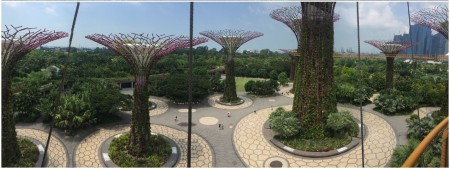22 The Supertrees are one of the distinctive landmarks of contemporary Singapore.