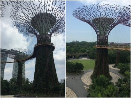 23 The Supertrees also provide a venting system for the Domes and are one of the highlights of the Gardens by the Bay.