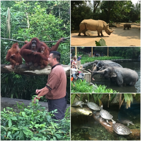 4 One of the world's leading Zoos is located in Singapore.