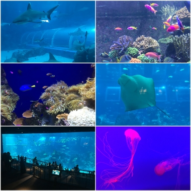 The South East Asian Aquarium incorporates some giant tanks which offer excellent viewing.