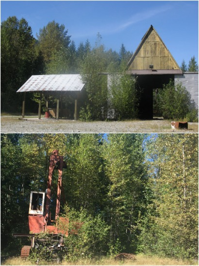 We discovered an disused timber camp with a crane and fine buildings abandoned in the forest.
