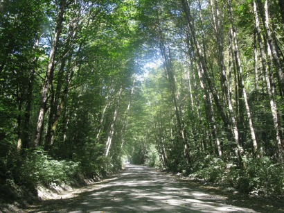 A typical BC Forestry Road.